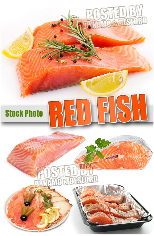 Red Fish - UHQ Stock Photo