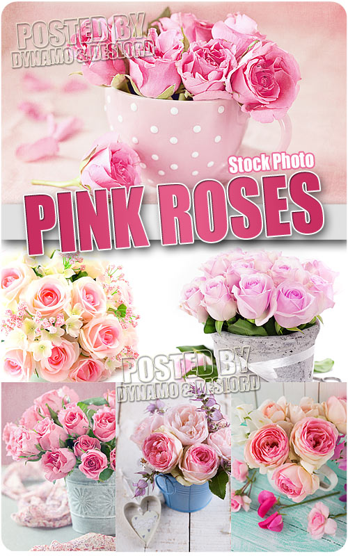 Pink roses - UHQ Stock Photo