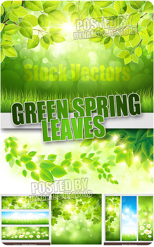 Green spring leaves - Stock Vectors