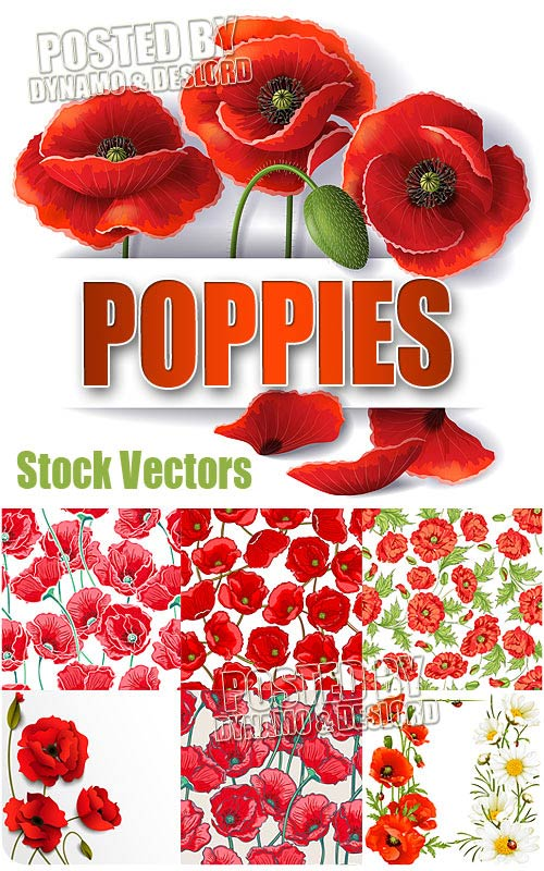 Poppy - Stock Vectors