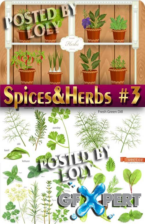 Spices and Herbs #3 - Stock Vector