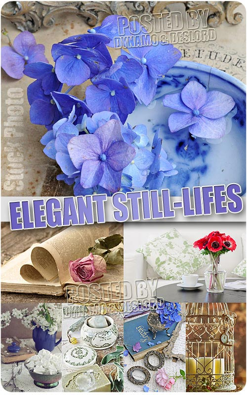 Elegant Still-lifes - UHQ Stock Photo