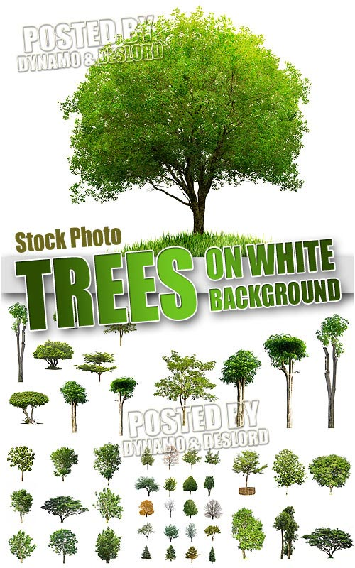 Trees on wtite 3 - UHQ Stock Photo