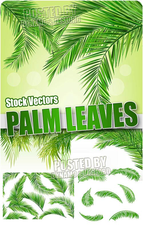 Palm leaves - Stock Vectors