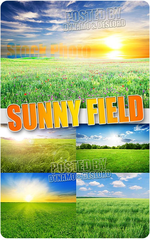 Sunny field 3 - UHQ Stock Photo
