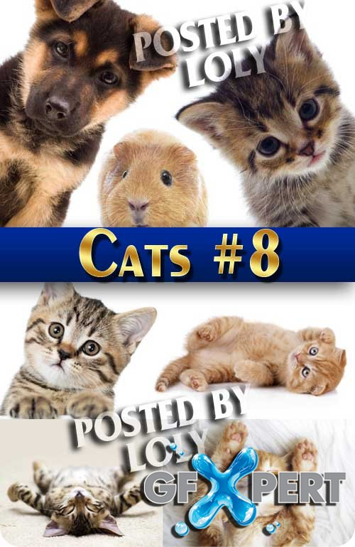Wonderful kittens #8 - Stock Photo