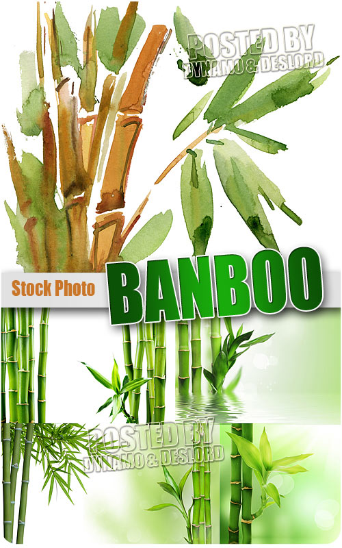 Bamboo - UHQ Stock Photo