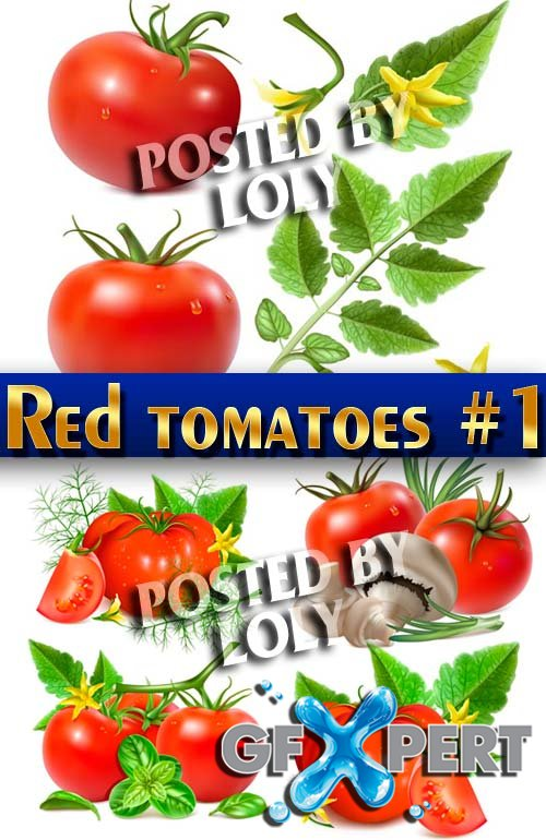 Ripe tomatoes #1 - Stock Vector