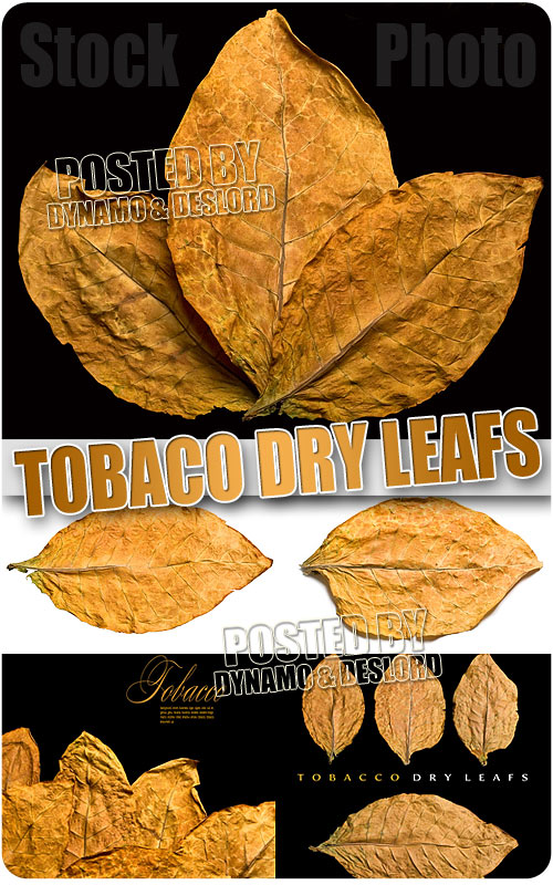 Tobaco dry leafs - UHQ Stock Photo