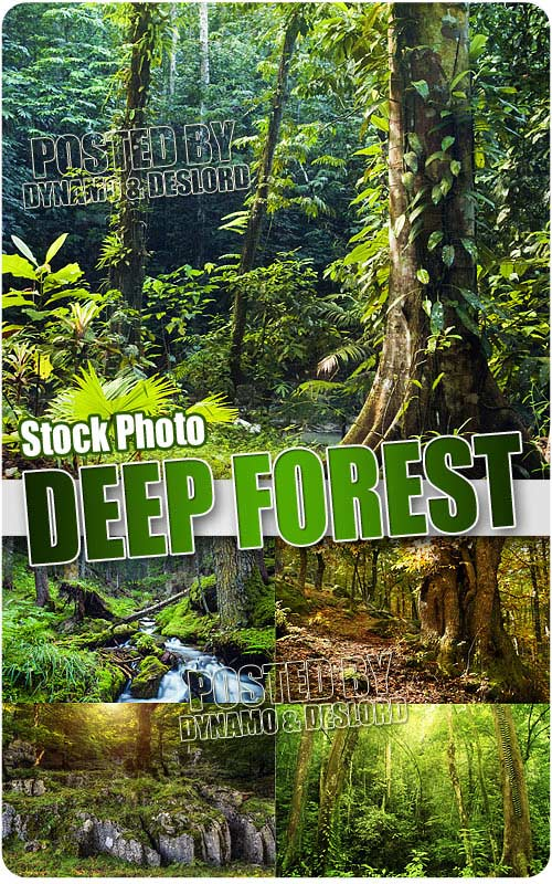 Deep forest - UHQ Stock Photo