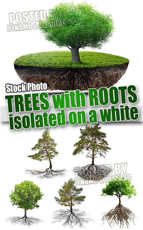 Tree with roots - UHQ Stock Photo