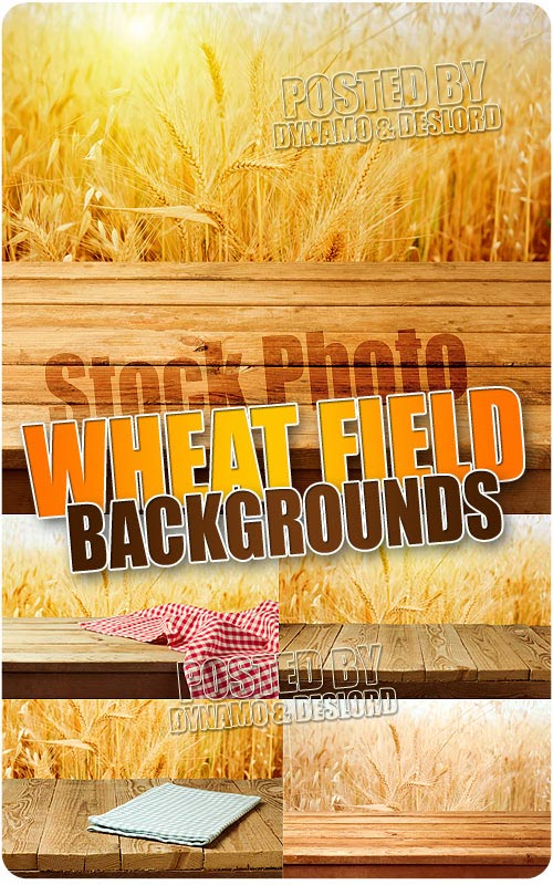 Wheat field background - UHQ Stock Photo