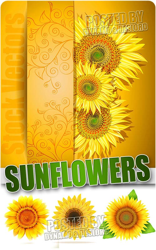 Sunflowers - Stock Vectors