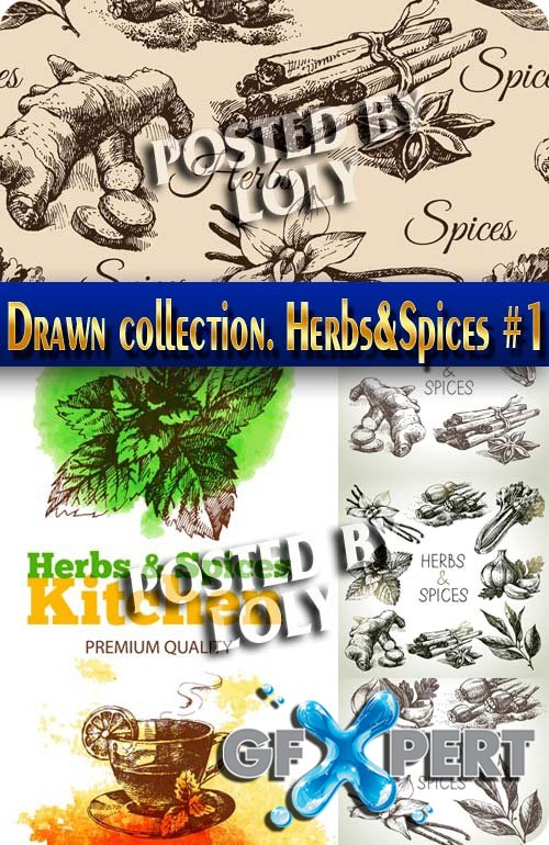 Hand drawn collection. Spices and Herbs #1 - Stock Vector