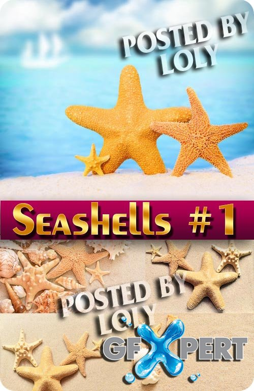 Seashells #1 - Stock Photo