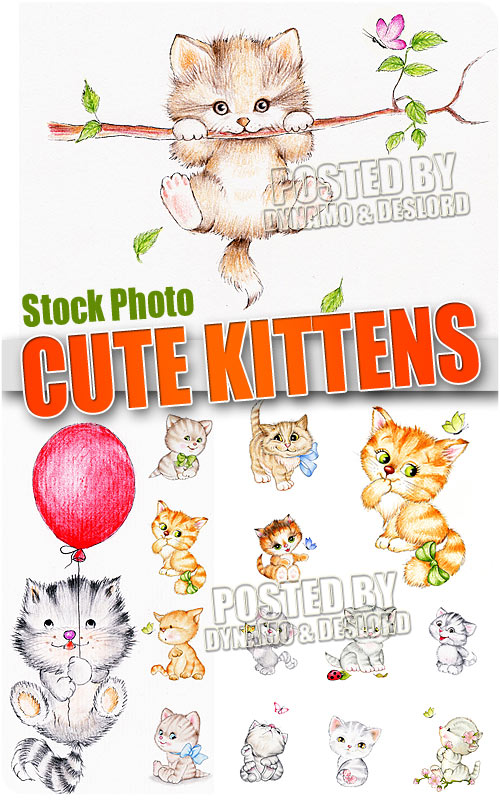 Cute kittens - UHQ Stock Photo