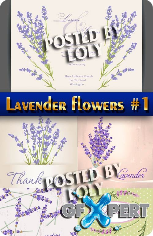 Lavender flowers #1 - Stock Vector