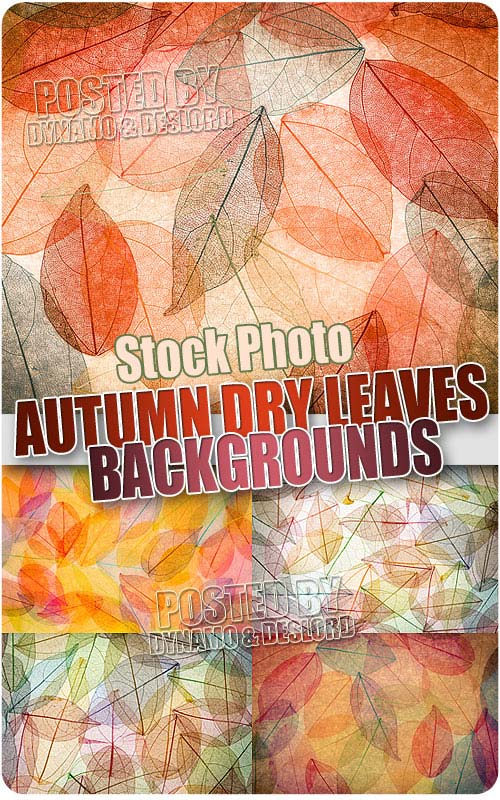 Autumn dry leaves background - UHQ Stock Photo