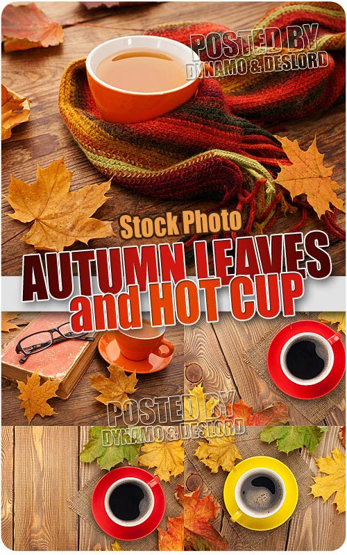 Autumn leaves and cup - UHQ Stock Photo