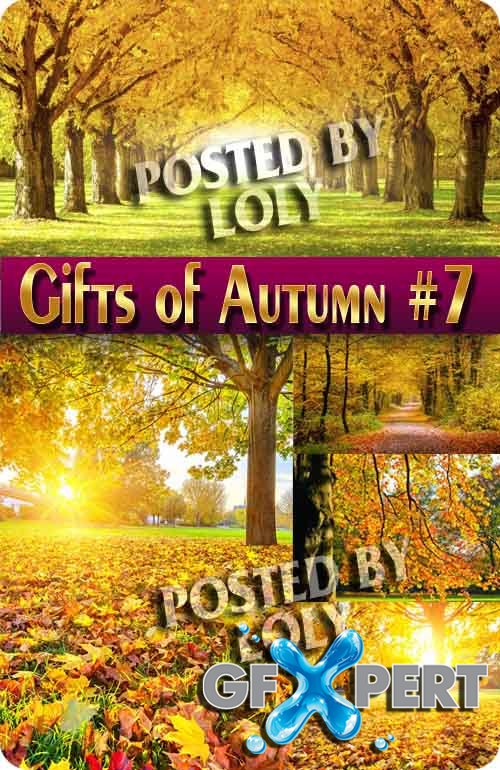 Gifts of Autumn  #7 - Stock Photo