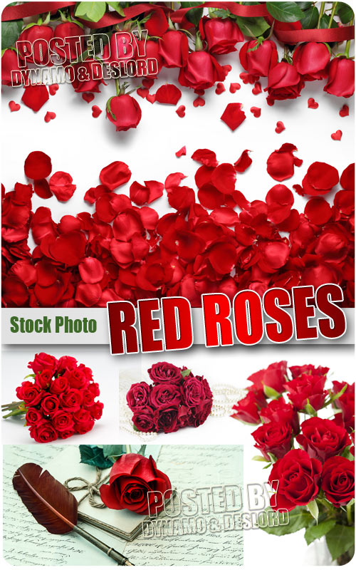 Red roses - UHQ Stock Photo