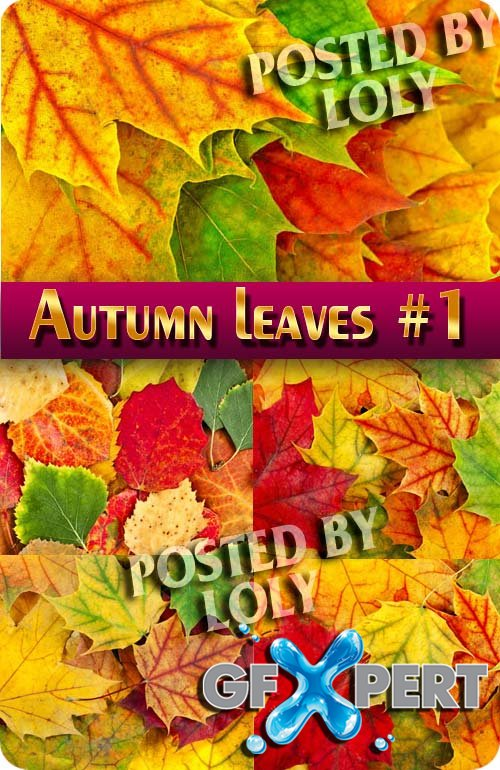 Autumn leaves #1 - Stock Photo