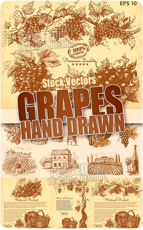 Hand drawn grapes - Stock Vectors