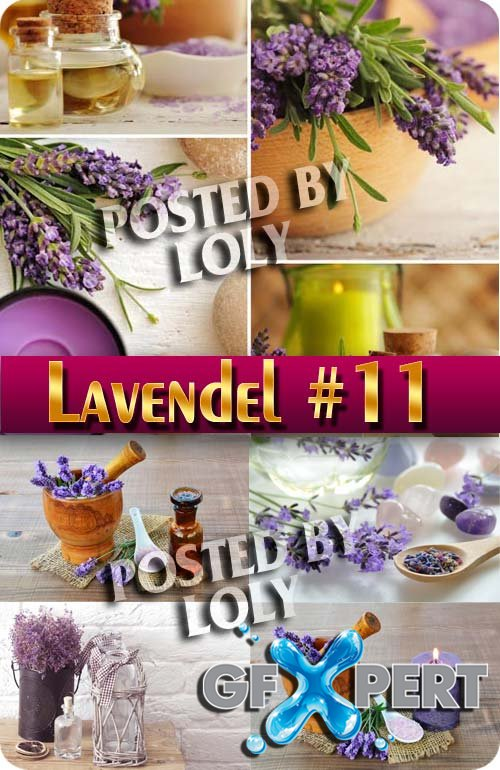 Lavender Flowers #1 - Stock Photo