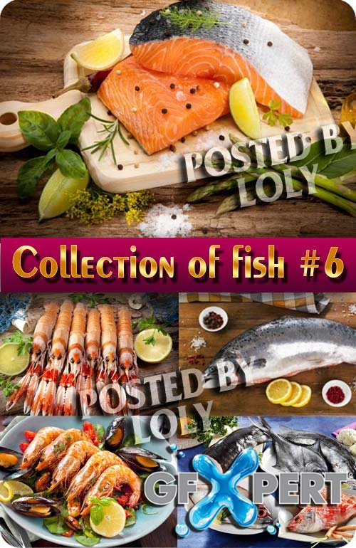 Collection of Fish #6 - Stock Photo