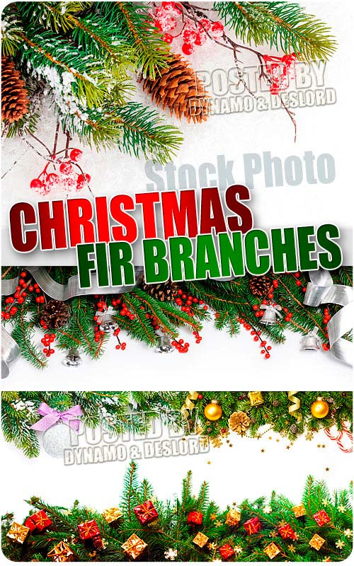 Christmas Fir branches - UHQ Stock Photo