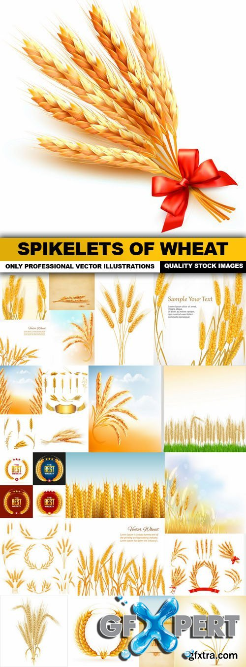 Spikelets Of Wheat - 25 Vector