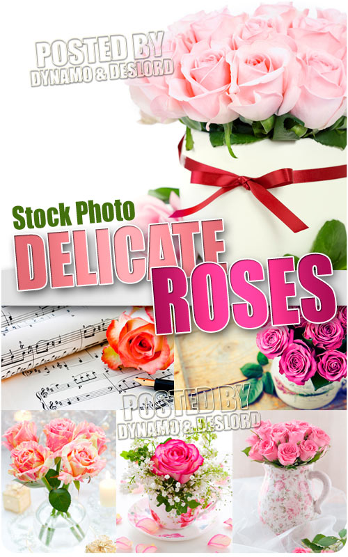 Delicate Roses - UHQ Stock Photo