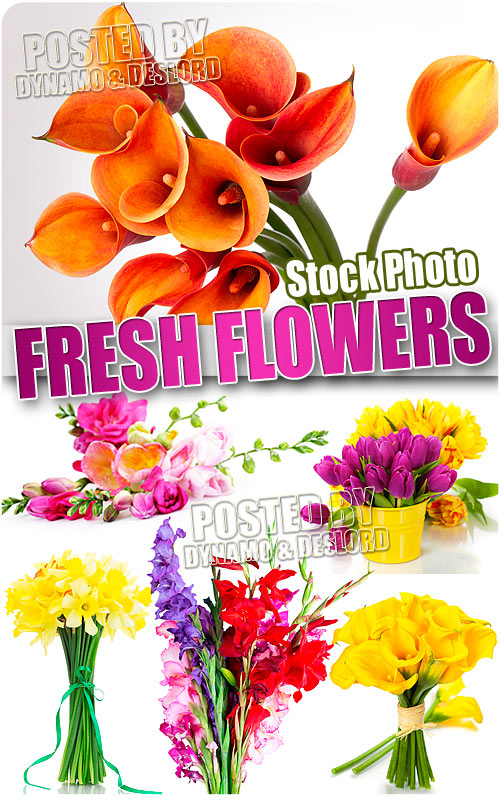 Fresh flowers - UHQ Stock Photo
