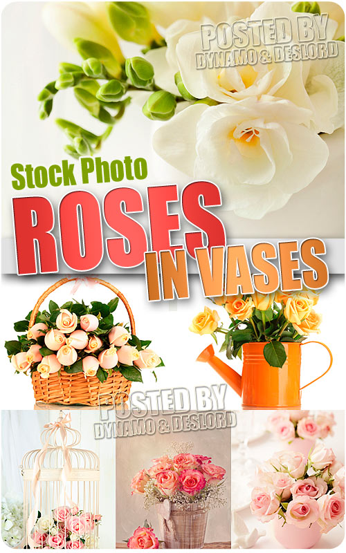 Roses in vases - UHQ Stock Photo
