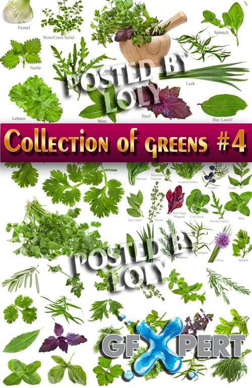 Food. Mega Collection. Greens #4 - Stock Photo