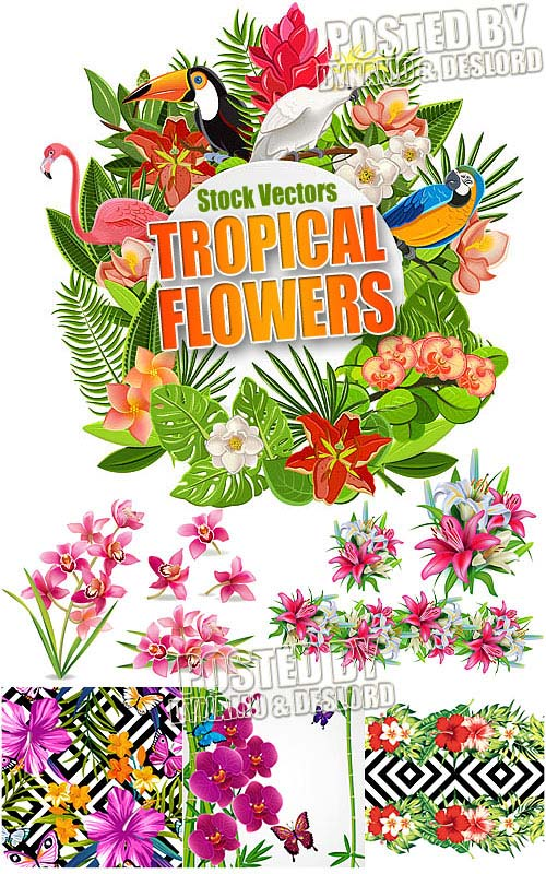 Tropical flowers - Stock Vectors