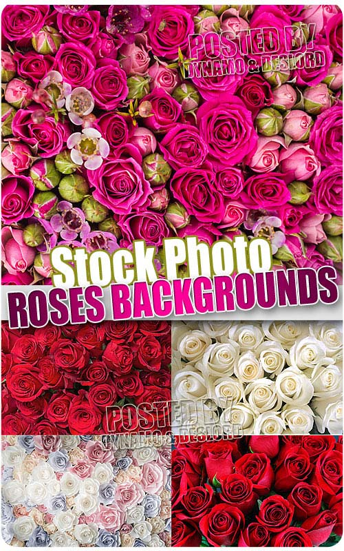 Rose backgrounds - UHQ Stock Photo