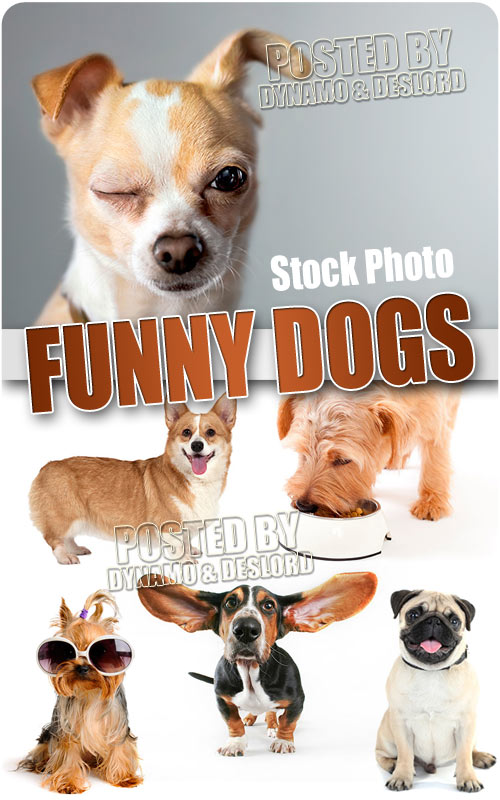 Funny dogs - UHQ Stock Photo