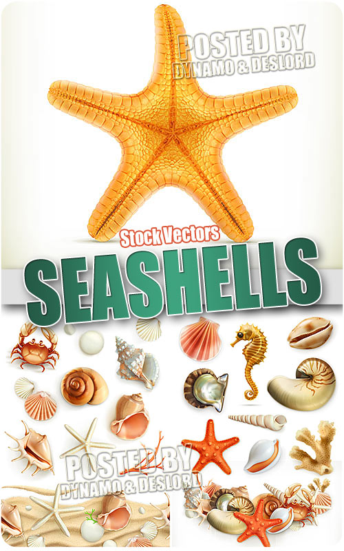 Seashells - Stock Vectors