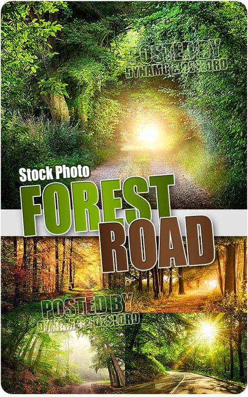 Forest road - UHQ Stock Photo