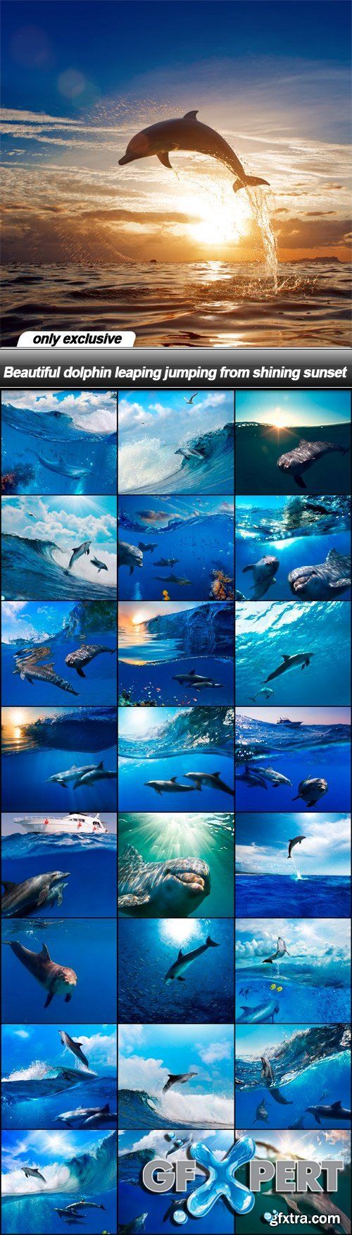 Beautiful dolphin leaping jumping from shining sunset - 25 UHQ JPEG