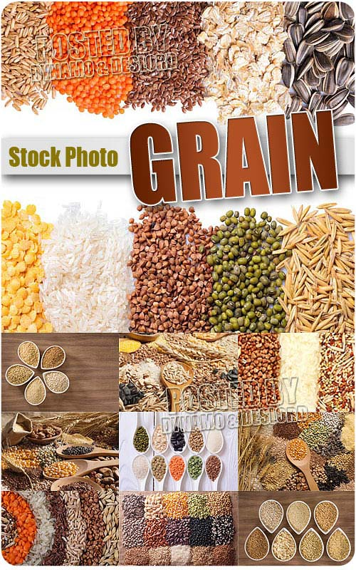 Grain - UHQ Stock Photo