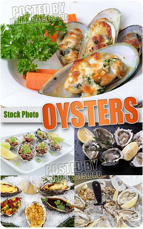 Oysters - UHQ Stock Photo
