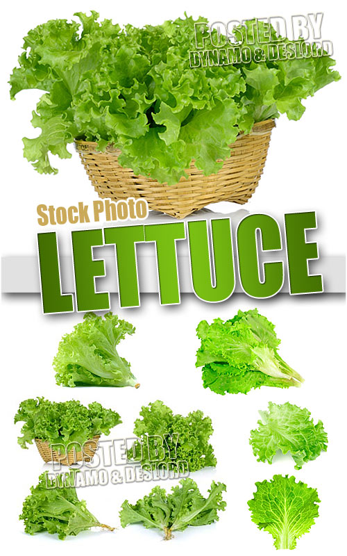 Lettuce - UHQ Stock Photo
