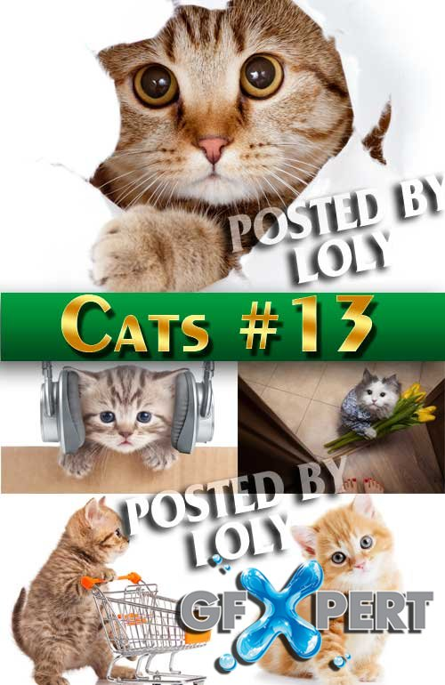 Cats #13 - Stock Photo