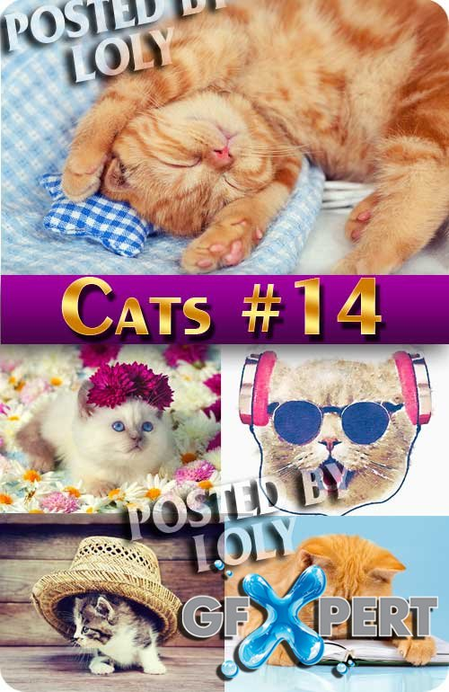 Cats #14 - Stock Photo
