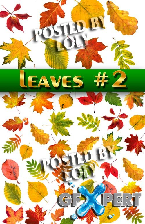 Autumn leaves #2 - Stock Photo