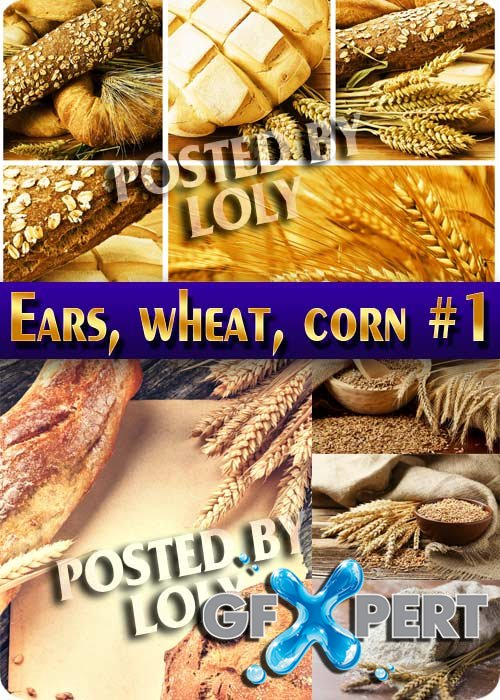 Ears, wheat, corn #1 - Stock Photo