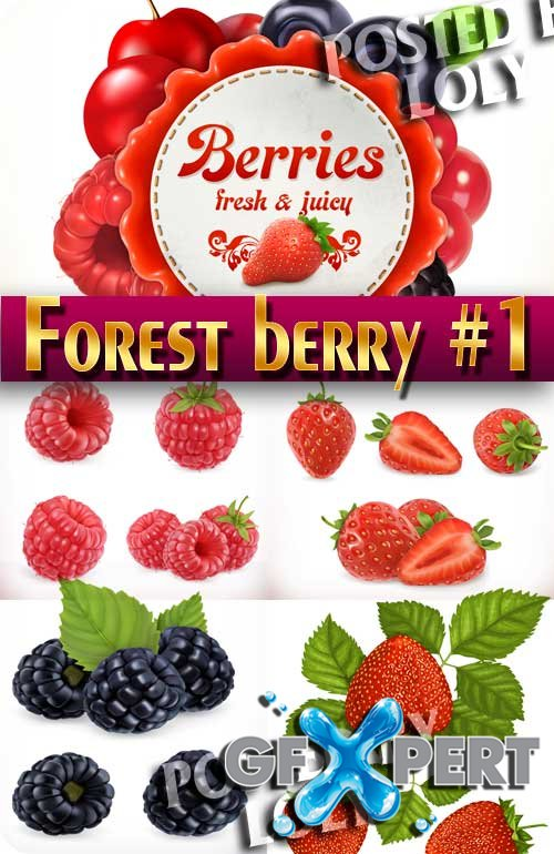 Forest berry #1 - Stock Vector